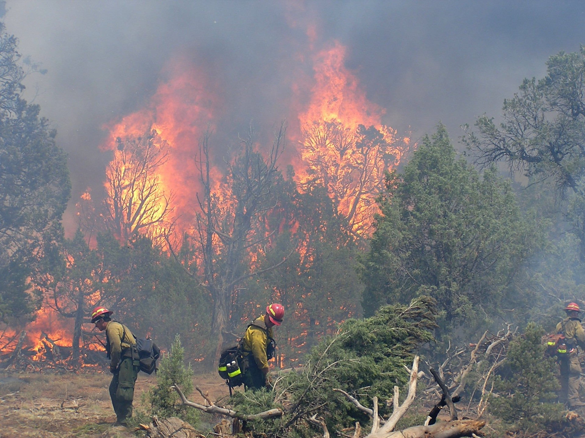 Wildland Fire Emergency Operation Plan